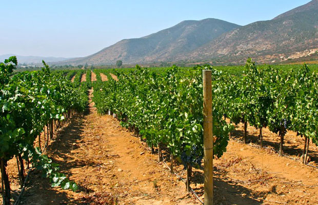 Thirsty Thursday: Mexican Wines