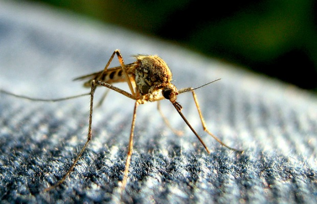 4 Travel Gadgets for Keeping Mosquitoes at Bay