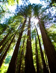 Visit the World's Most Majestic Forests