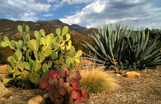 Ojai: An Affordable, Rejuvenating Roadtrip from Los Angeles