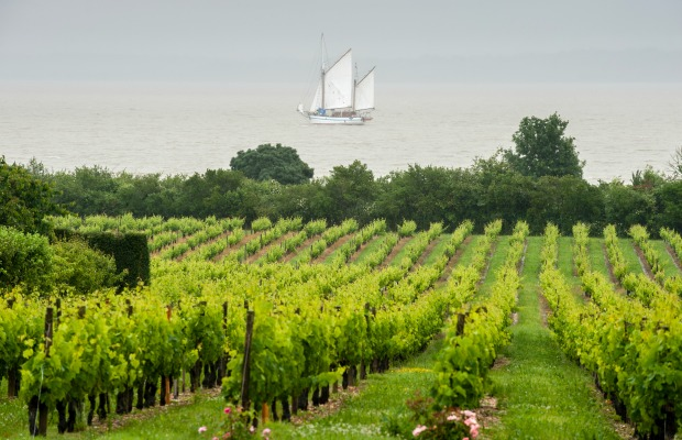 Beyond Tastings: 5 Interactive Wine Adventures in Bordeaux