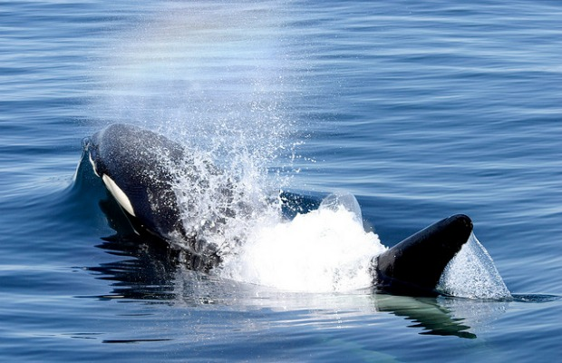7 Alternatives to SeaWorld