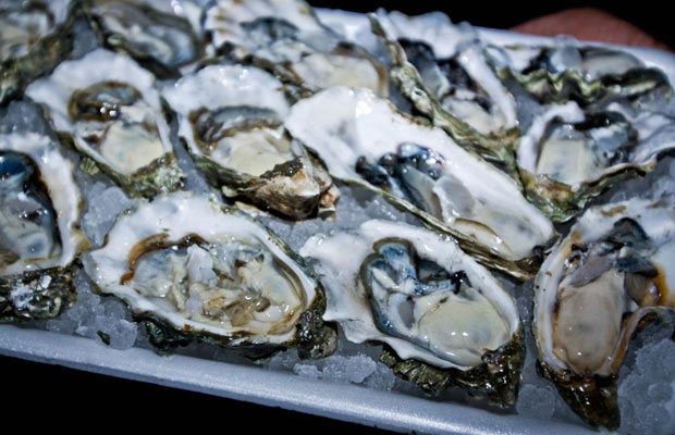 Foodie Friday: Where to Eat Oysters in New Orleans