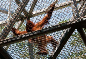 Zoos that Let Humans Live on the Wild Side