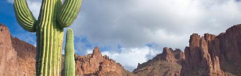 Phoenix and Scottsdale Spotlight