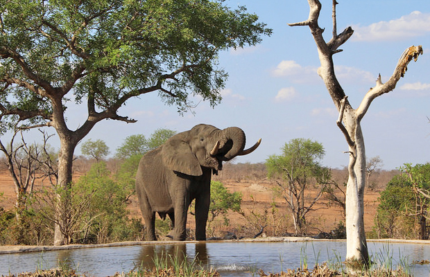 The Real Cost of an African Safari: From Budget to Splurge