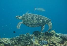 Pullman Reef Hotel Casino Great Barrier Reef Scuba Package