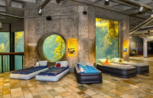 5 Zoos And Aquariums Where You Can Spend The Night
