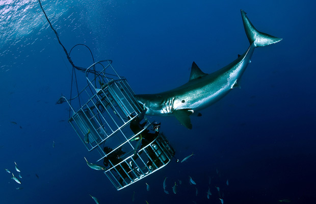 Create Your Own Real-Life Shark Adventure