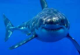 Shark Week 2012: Shark Tours and Other Off-Screen Adventures