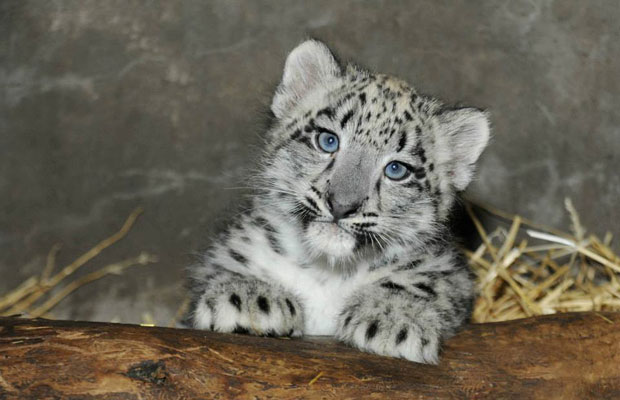 7 New Baby Animals to See in U.S. Zoos