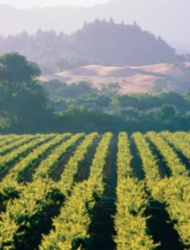 Long Weekend in Sonoma County Wine Country