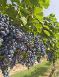 Harvesting Hill Country: What's Hot in Texas's Wine Hub