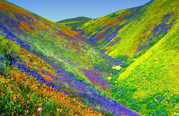 Inspired Travel: Valley of Flowers