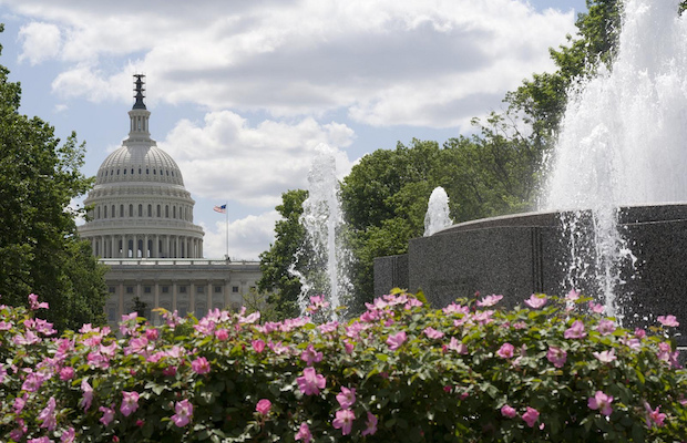 D.C. for Less During the Cherry Blossom Festival and Beyond
