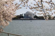 D.C. Hotel Celebrates Cherry Blossom Festival from $219/Nt