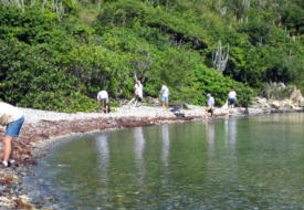 Westin St. John Offers $100 Resort Credit to Guests Who Volunteer