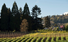 Visit a Newcomer to Wine Country