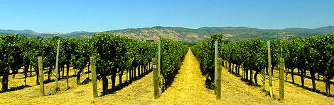 Top 10 Unknown U.S. Wine Regions