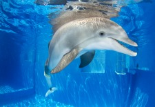 Meet <i>Dolphin Tale</i> Star Winter at the Clearwater Marine Aquarium